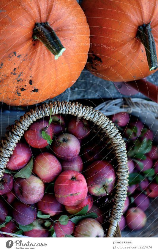 Wintervorrat Herbst Energie natürlich gut Apfel fantastisch Gemüse Ernte saftig Korb Biologische Landwirtschaft Kürbis essbar Lebensmittel Naturprodukt
