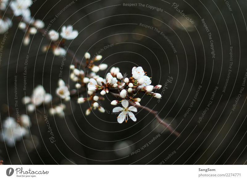 Frühlingsblüher Natur Pflanze weiß Baum Blume gelb Umwelt Blüte Gefühle Garten grau braun Park Wetter fantastisch