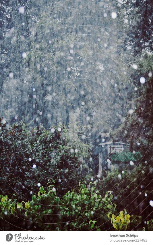 Schnee/Regen Natur blau grün Baum Winter Herbst dunkel grau Garten Traurigkeit Luft Wetter Klima Wassertropfen Sträucher