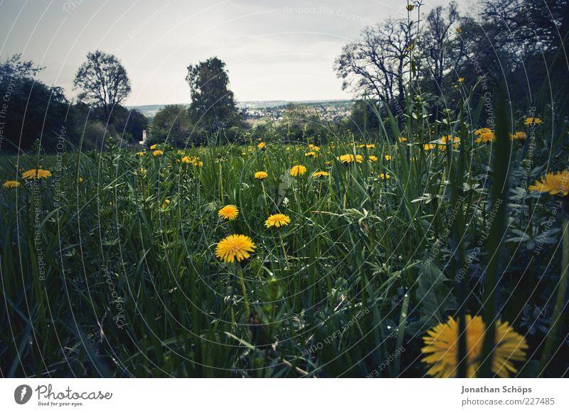 Düsterheide Natur blau grün Pflanze Sommer Blume schwarz gelb Freiheit Umwelt Landschaft Gefühle Gras Luft Horizont ästhetisch