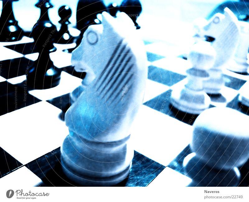 Schachfiguren II weiß schwarz Spielen Denken planen Pferd Freizeit & Hobby Verstand Schachfigur Brettspiel