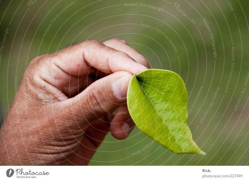 ".""Du kauen, dann du fliiiiegen!"" Mensch Natur grün Hand Pflanze Blatt Umwelt Gesundheit frisch Finger Sauberkeit festhalten genießen Kräuter & Gewürze Rauschmittel exotisch"