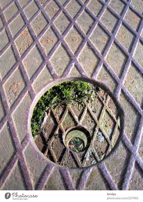 Loch im Loch im Loch im Blech Moos Metall Rost Symmetrie Kreis Durchblick Riffelblech Eisen gelöchert Trittbrett Linie Muster parallel aufeinander Stahlblech