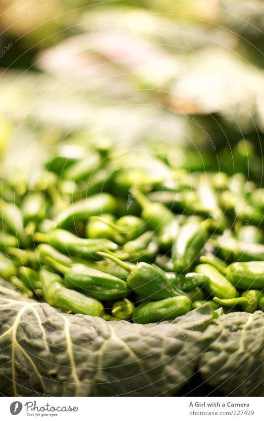 red hot sind die chilli peppers auch wenn sie green sind grün Ernährung Lebensmittel klein Gesundheit glänzend liegen frisch natürlich viele Kräuter & Gewürze