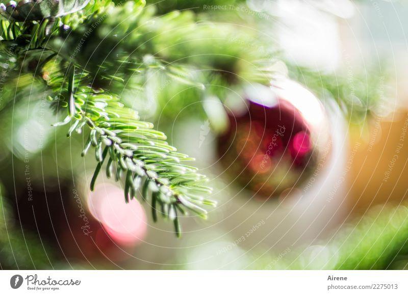 schon wieder nur noch Erinnerung Weihnachten & Advent schön grün Baum rot ästhetisch frisch Glas Fröhlichkeit Freundlichkeit Kitsch Weihnachtsbaum Kugel hängen