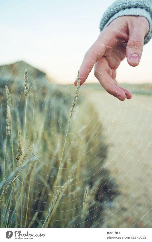 Hand berührt eine Spitze Wellness harmonisch Sinnesorgane Erholung ruhig Ferien & Urlaub & Reisen Expedition Umwelt Natur Pflanze Frühling Sommer Gras Sträucher
