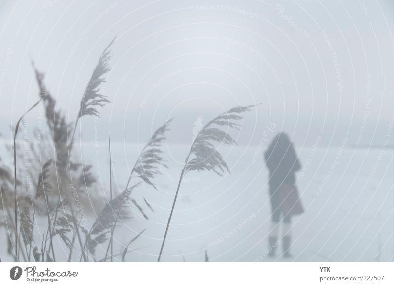 Lonely Girl Umwelt Natur Landschaft Pflanze Luft Winter Klima schlechtes Wetter Nebel Sträucher Wildpflanze Stimmung Einsamkeit einzeln Schneefall kalt Wegsehen