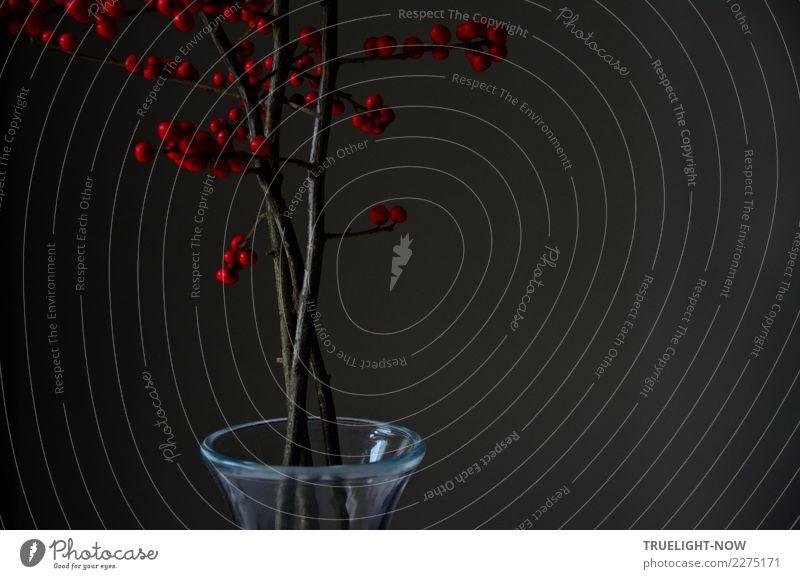 Winterberry in Glasvase am Morgen schön rot ruhig dunkel Leben Traurigkeit natürlich Kunst grau braun Häusliches Leben träumen Dekoration & Verzierung elegant