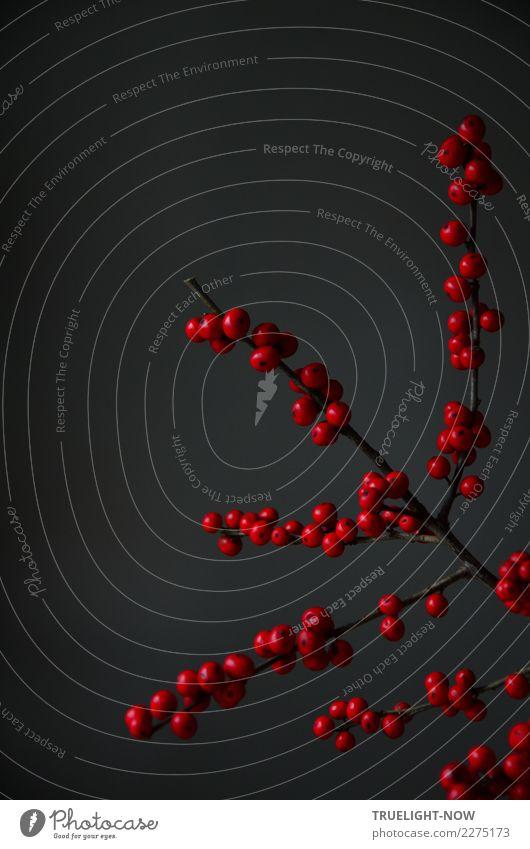 ...Oder doch nicht? rot ruhig Winter dunkel schwarz Leben kalt Stil Kunst Tod grau Design Wohnung Dekoration & Verzierung elegant frisch