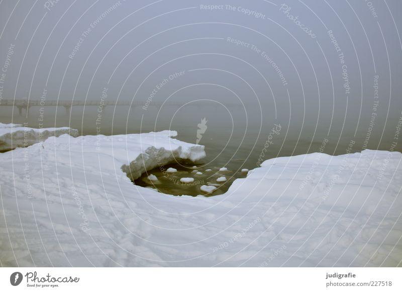 Küstennebel Natur Wasser Meer Winter Einsamkeit dunkel kalt Schnee Landschaft Eis Stimmung Küste Nebel Umwelt Brücke Frost