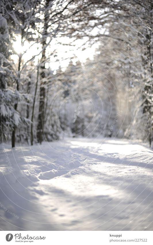 Spuren im Schnee Winter Umwelt Natur Landschaft Pflanze Sonnenlicht Schönes Wetter Baum Wald braun weiß bodennah kalt Menschenleer natürlich unbearbeitet