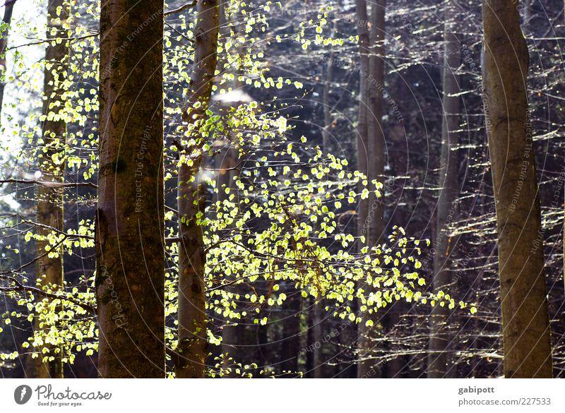 und dazwischen Zwischenräume Natur grün Baum Pflanze Blatt Wald Landschaft Frühling hell braun Schönes Wetter positiv Vorfreude Morgen Frühlingsgefühle