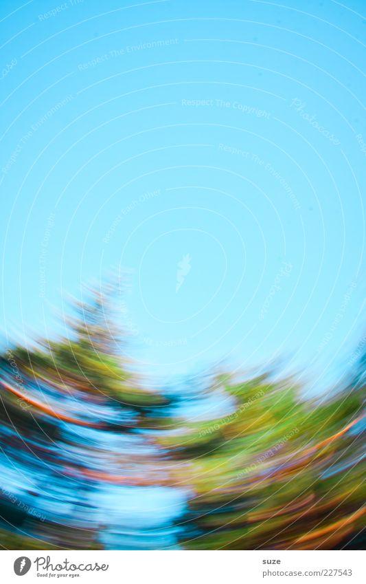 O´Tannebaum Natur blau Weihnachten & Advent grün Umwelt Bewegung Herbst Feste & Feiern Lifestyle Kunst wild Freizeit & Hobby verrückt rund Sturm Weihnachtsbaum