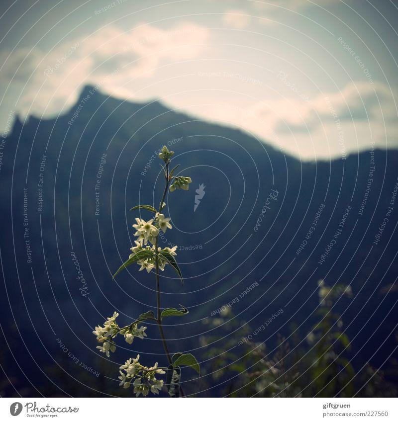 zwerge & giganten Himmel Natur Pflanze Sommer Blume Blatt Wolken Umwelt Berge u. Gebirge Landschaft Blüte klein Felsen Wachstum Urelemente Hügel