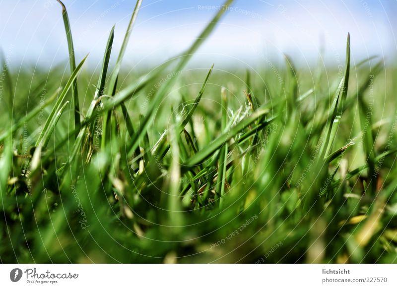 Graswald Leben Sommer Natur Landschaft Pflanze Himmel Frühling Schönes Wetter Wiese frisch saftig schön blau grün Farbe Klima Ferne Hintergrundbild Halm