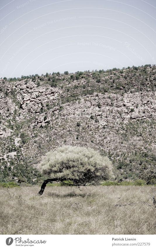 the last tree Natur Himmel Baum Pflanze Sommer Gras Wärme Landschaft Luft Wetter Umwelt trist Sträucher Klima heiß Hügel