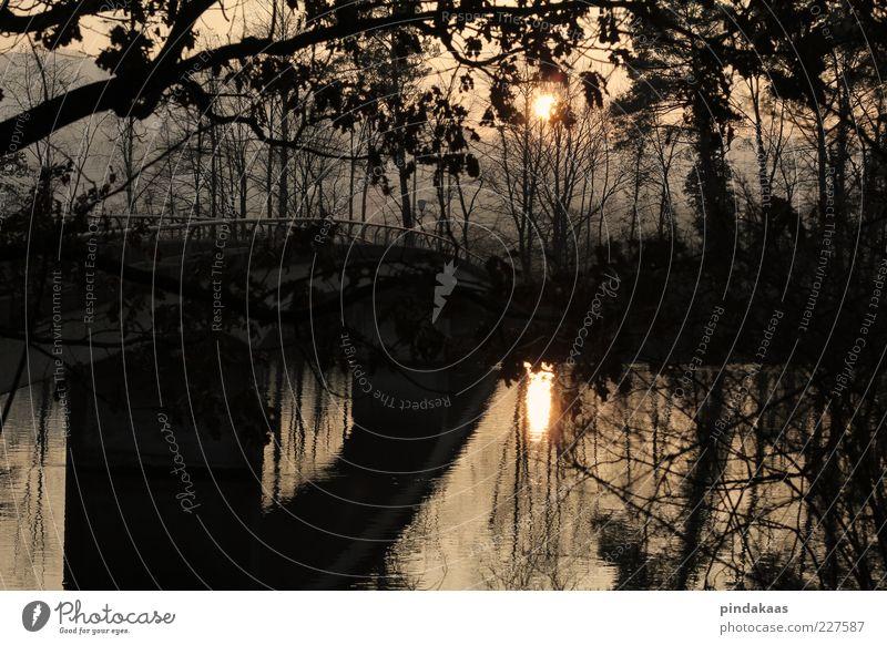 der frühling zeigt sich Natur rot Sonne Winter schwarz Erholung Umwelt Park Nebel Brücke Fluss Warmherzigkeit Wasseroberfläche Dämmerung Zweige u. Äste Wasserspiegelung