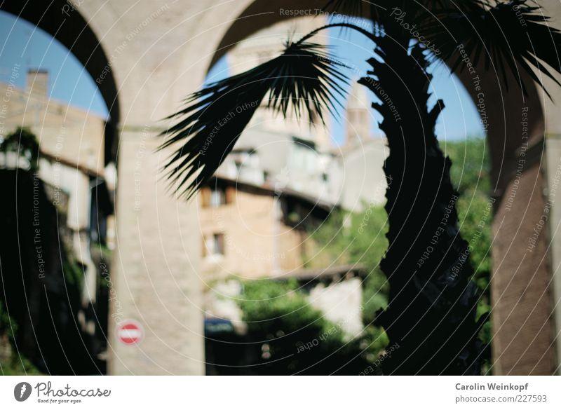Palme. Sommer Wolkenloser Himmel Sonne Baum Blatt Frankreich Dorf Stadt Altstadt Menschenleer Haus Kirche Dom Platz Brücke Turm Tor Bauwerk Gebäude Architektur