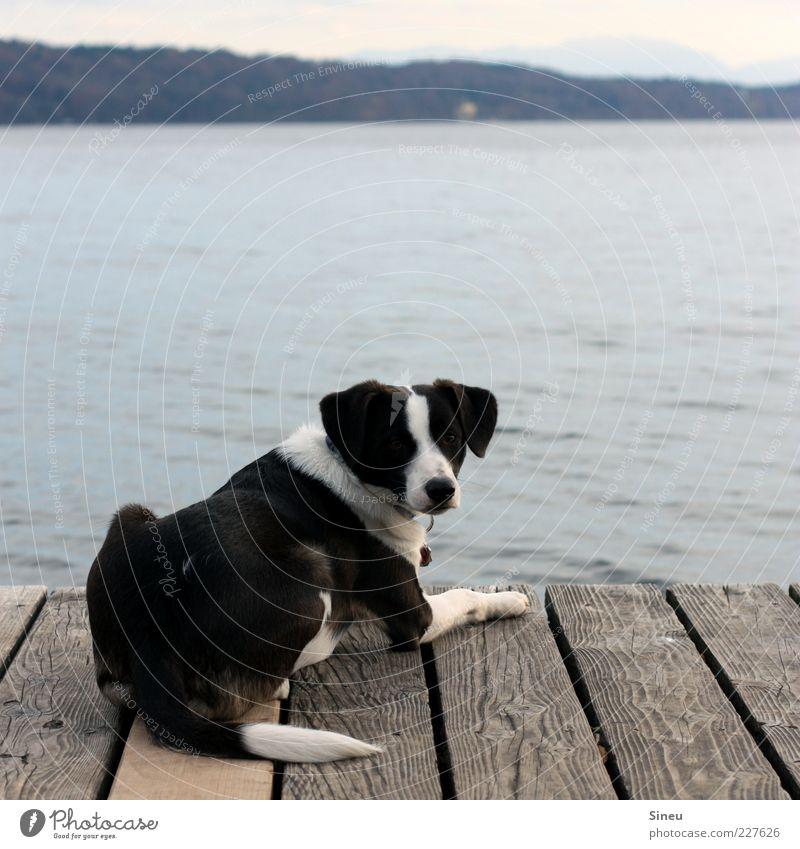 Ja bitte? Hund Wasser Tier Einsamkeit ruhig Ferne Erholung See Zufriedenheit liegen Pause niedlich Fell Tiergesicht Schönes Wetter Seeufer