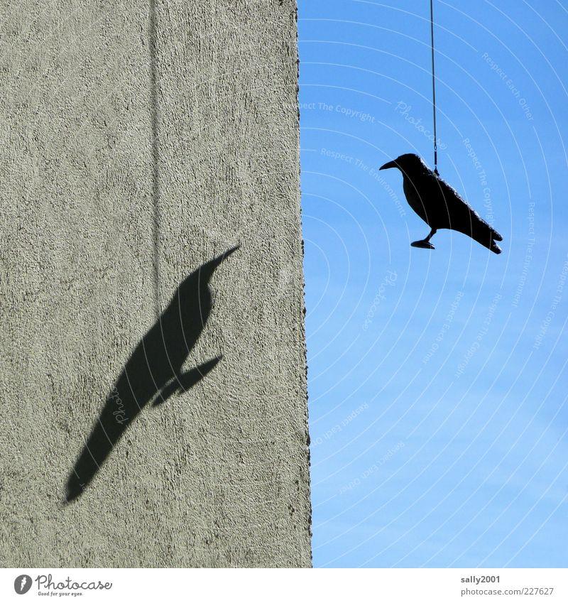 Fly, shadow, fly Himmel blau Einsamkeit Tier schwarz Wand Umwelt grau Mauer Vogel Zusammensein Fassade Tierpaar Perspektive außergewöhnlich Sehnsucht