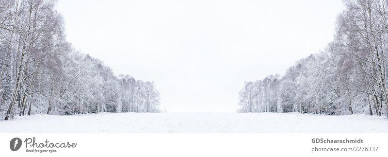 Winterwelt Zufriedenheit ruhig Meditation Ausflug Abenteuer Freiheit Schnee Winterurlaub Umwelt Natur Landschaft Himmel Horizont Schönes Wetter Eis Frost Baum