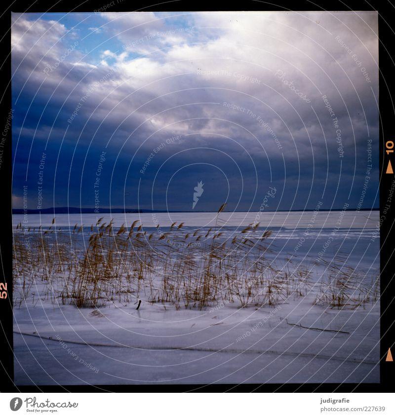 Steinhude Umwelt Natur Landschaft Wasser Himmel Wolken Winter Klima Wetter Eis Frost Schnee Pflanze Gras Küste Seeufer Steinhuder Meer kalt natürlich wild