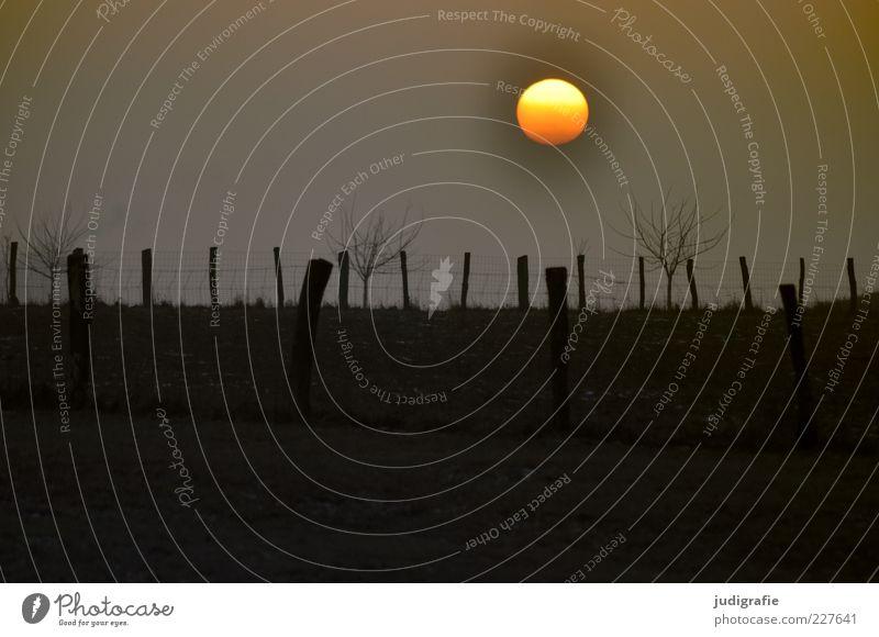 Hannover, sonntags Umwelt Natur Landschaft Sonne Sonnenaufgang Sonnenuntergang Pflanze Baum außergewöhnlich dunkel natürlich Stimmung Zaun Wiese Farbfoto