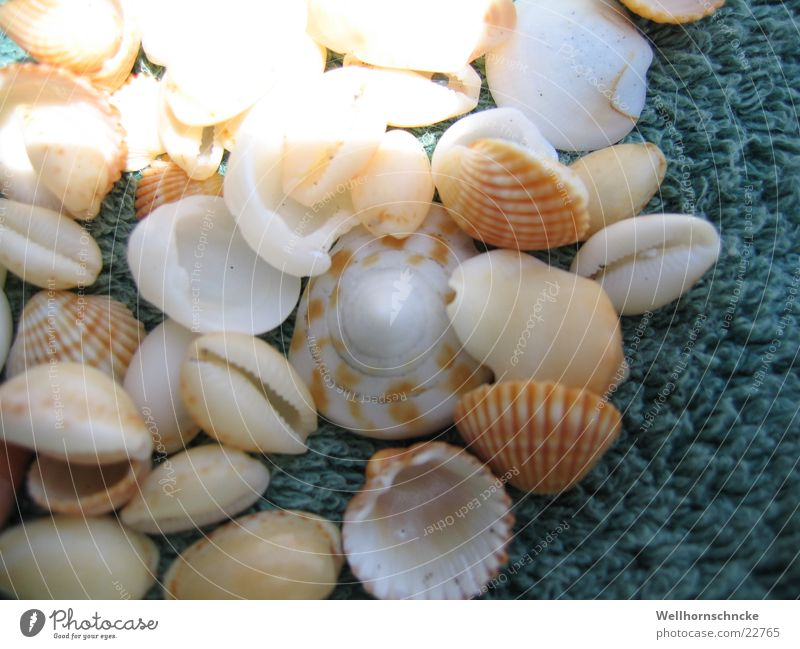 Muscheln Meer Strand Ferien & Urlaub & Reisen Sammlung