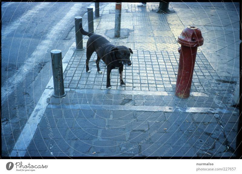 Hund & Hydrant Lifestyle Umwelt Straße Wege & Pfade Tier Haustier Stein Stahl Zeichen frei trashig trist unten Stadt wild Tierliebe Angst Surrealismus