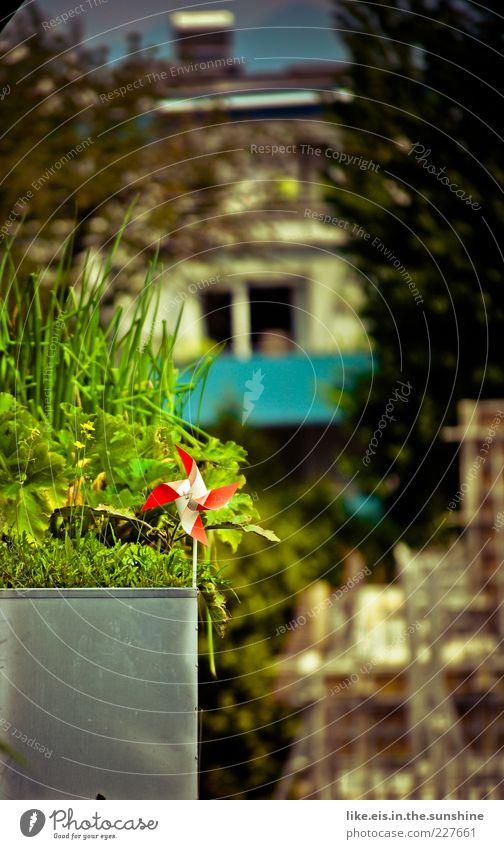 ein schlückchen Frühling grün Pflanze rot Sommer Haus Erholung Garten Gras glänzend Dekoration & Verzierung Idylle Balkon Stengel Stadtleben Schönes Wetter