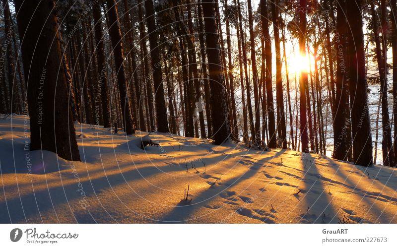 Der Schatten ist Zeuge des Lichts Natur Landschaft Sonnenaufgang Sonnenuntergang Winter Schnee Baum Wald Hügel Stimmung Vorfreude Sehnsucht Hoffnung Farbfoto
