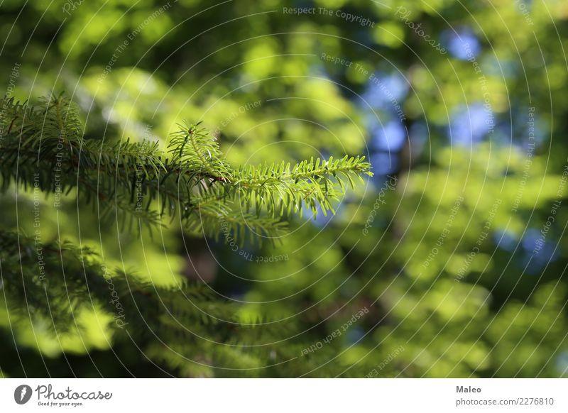 Nadeln Tannennadel grün Wald Nadelbaum Unschärfe Ast Baum Pflanze Lärche Fichte Kiefer Botanik Hintergrundbild Natur Saison Weihnachten & Advent Zweig