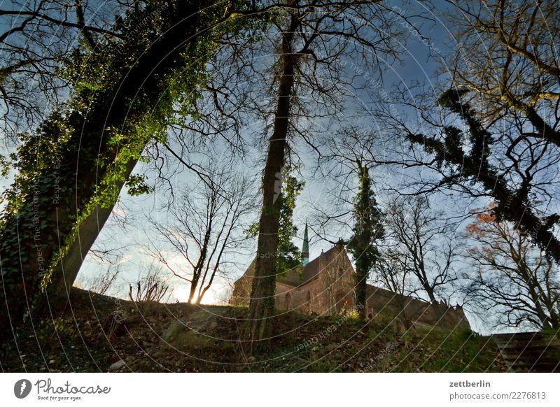 Kloster Chorin Himmel Natur Himmel (Jenseits) Landschaft Sonne Baum Winter Herbst See Textfreiraum Ast Baumstamm Konzert Ruine Efeu Brandenburg