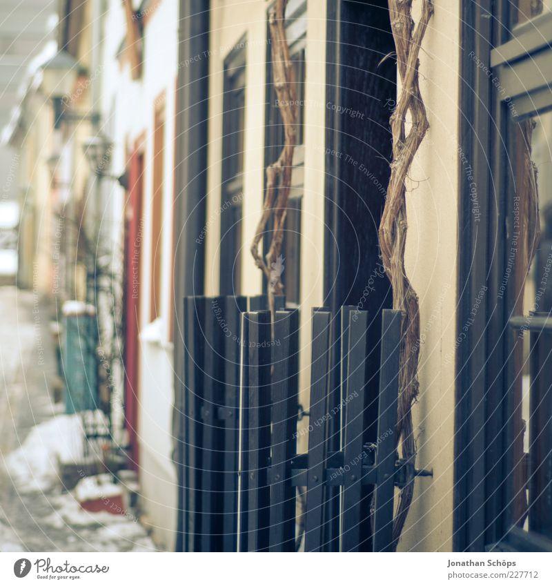 eingezäuntes Baumzeug Erfurt Kleinstadt Haus Einfamilienhaus ästhetisch einzigartig blau braun gelb Idylle Zaun Fenster Fluchtlinie Eingang Tür Pflanze