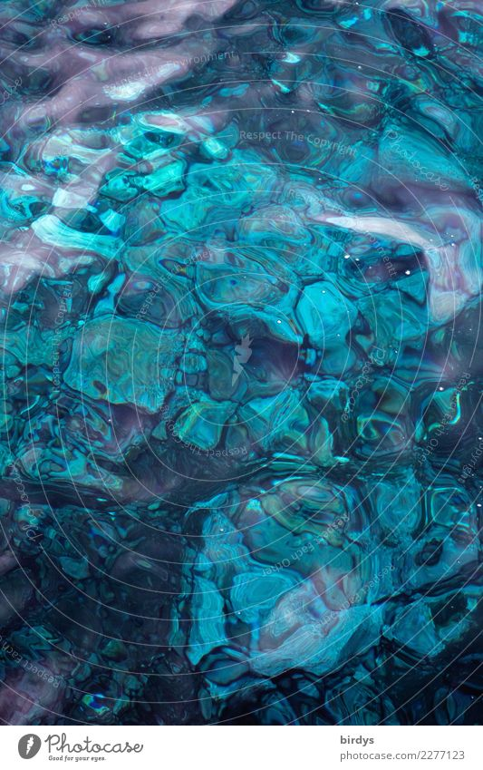Madeira blue 2 Meer Wasser Riff Korallenriff Stein ästhetisch außergewöhnlich frisch maritim positiv schön blau türkis Design Farbe rein Hintergrundbild
