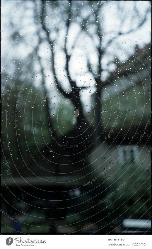 Tropfen auf dem Fenster Natur Baum Einsamkeit Haus kalt Fenster Herbst Umwelt Landschaft Garten Stimmung Regen nass glänzend Wassertropfen trist