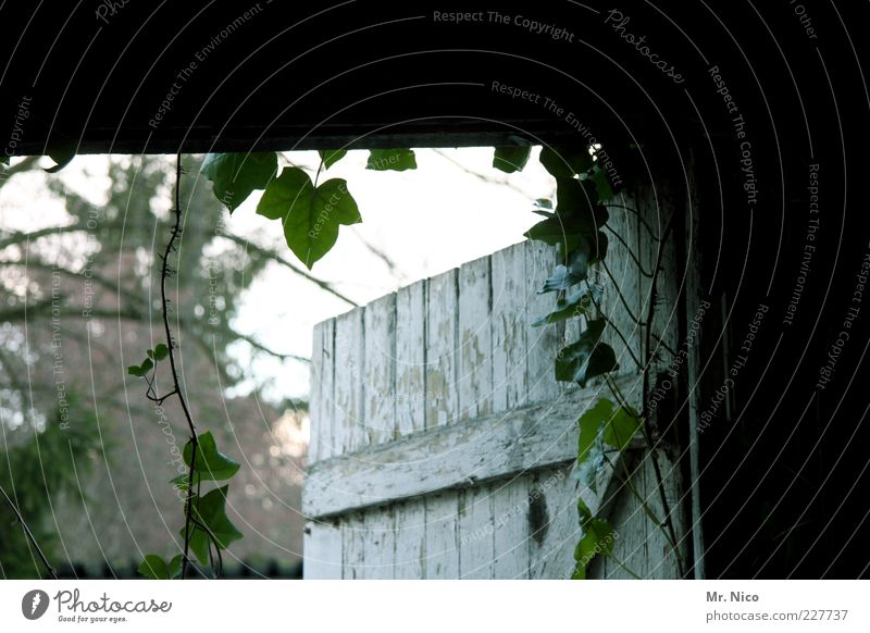 rein oder raus ? alt Pflanze Blatt Architektur offen geheimnisvoll Verfall Eingang Nostalgie Efeu Ausgang Ranke Tür Holztür Lagerschuppen Holztor