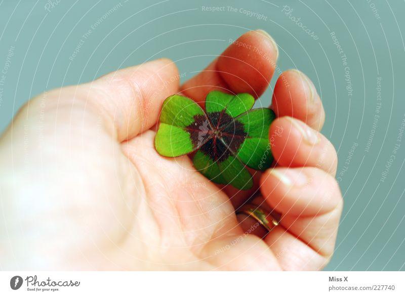 Glücksklee Hand grün Blatt Hoffnung festhalten Symbole & Metaphern positiv zeigen Kleeblatt Glücksbringer vierblättrig