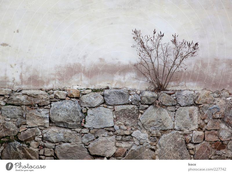 Warten auf den Frühling Natur Herbst Pflanze Sträucher Gebäude Mauer Wand Fassade Stein Beton alt verblüht dehydrieren Wachstum einfach trocken braun grau