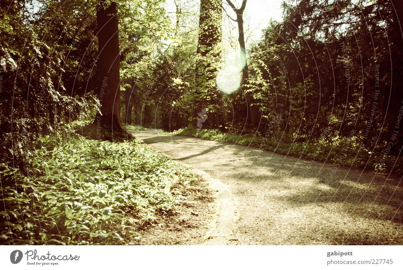 Waldspaziergang Natur grün Baum Pflanze Blatt ruhig Wald Landschaft Wege & Pfade Park braun Schönes Wetter Fußweg Kurve Grünpflanze Blendenfleck