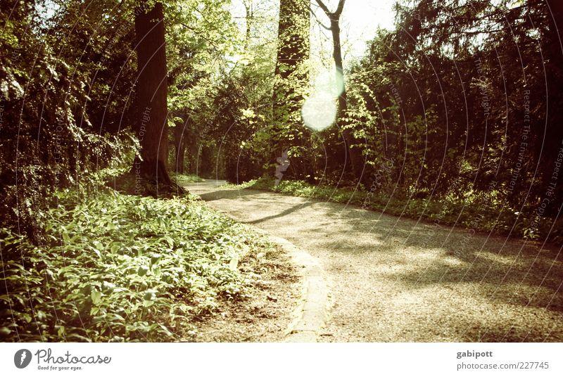 Waldspaziergang Natur Landschaft Schönes Wetter Pflanze Baum Blatt Grünpflanze Park Wege & Pfade braun grün Kurve Blendenfleck ruhig Außenaufnahme Menschenleer
