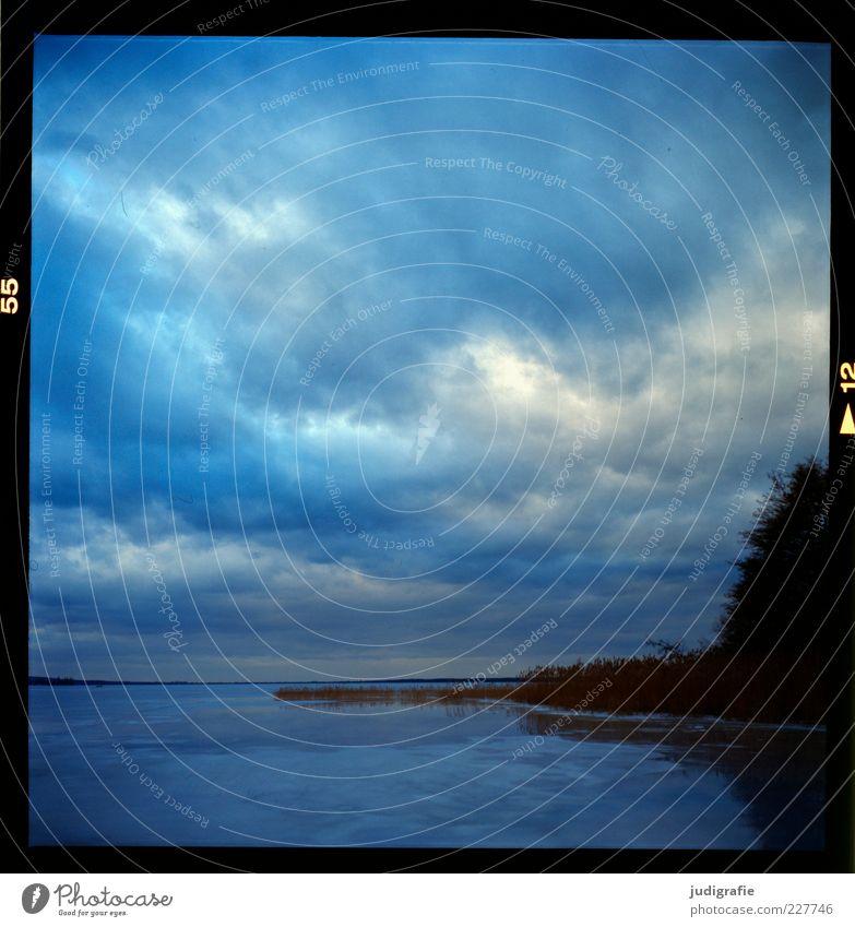 Steinhude Umwelt Natur Landschaft Pflanze Wasser Himmel Wolken Winter Klima Eis Frost Sträucher Seeufer Steinhuder Meer kalt natürlich blau Stimmung Farbfoto