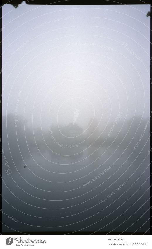 Haveldunst Umwelt Natur Landschaft Urelemente Wasser Klima Klimawandel schlechtes Wetter Nebel Flussufer Wildtier Vogel Ferien & Urlaub & Reisen trist Stimmung