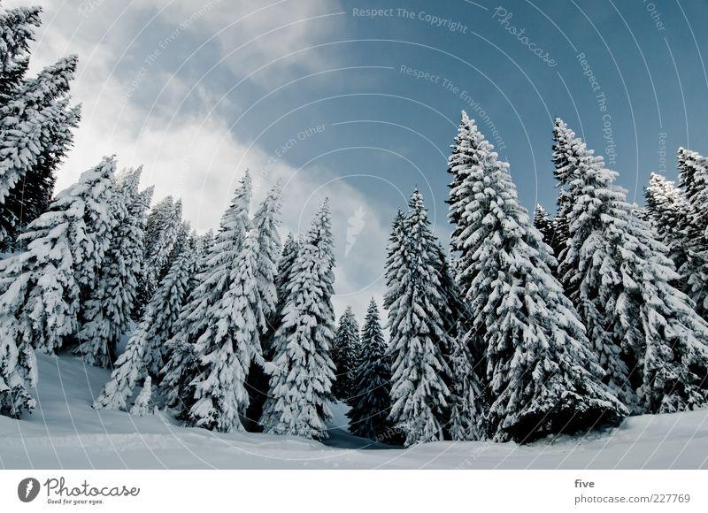 spitzentreffen Ferne Winter Schnee Skipiste Natur Landschaft Erde Himmel Wolken Pflanze Baum Wald Hügel Felsen Alpen kalt Farbfoto Außenaufnahme Tag Licht
