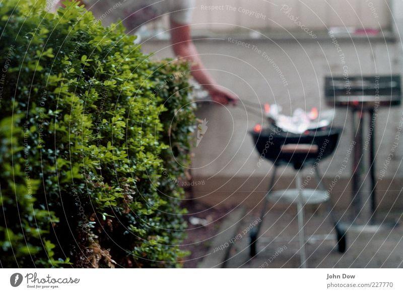 catch the fire Ernährung Mann Erwachsene Arme Schönes Wetter Pflanze Sträucher Garten Verantwortung achtsam Wachsamkeit Grill Grillen Sommer Hecke Unschärfe