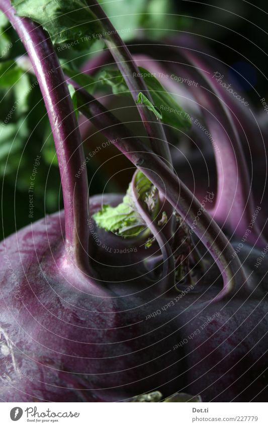 Kohlruby rot Blatt Ernährung Lebensmittel Gesundheit frisch violett Gemüse Stengel Bioprodukte Hülle roh Vegetarische Ernährung Knolle Vegane Ernährung
