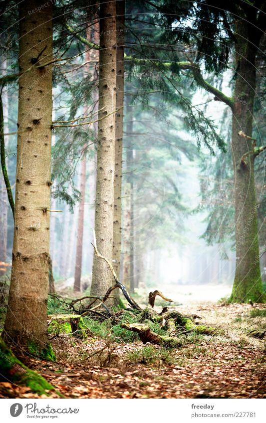 Auf der Suche... Umwelt Natur Landschaft Pflanze Erde Herbst Klima Klimawandel Schönes Wetter Nebel Baum Blatt Grünpflanze Wald Holz Wachstum Hoffnung Glaube
