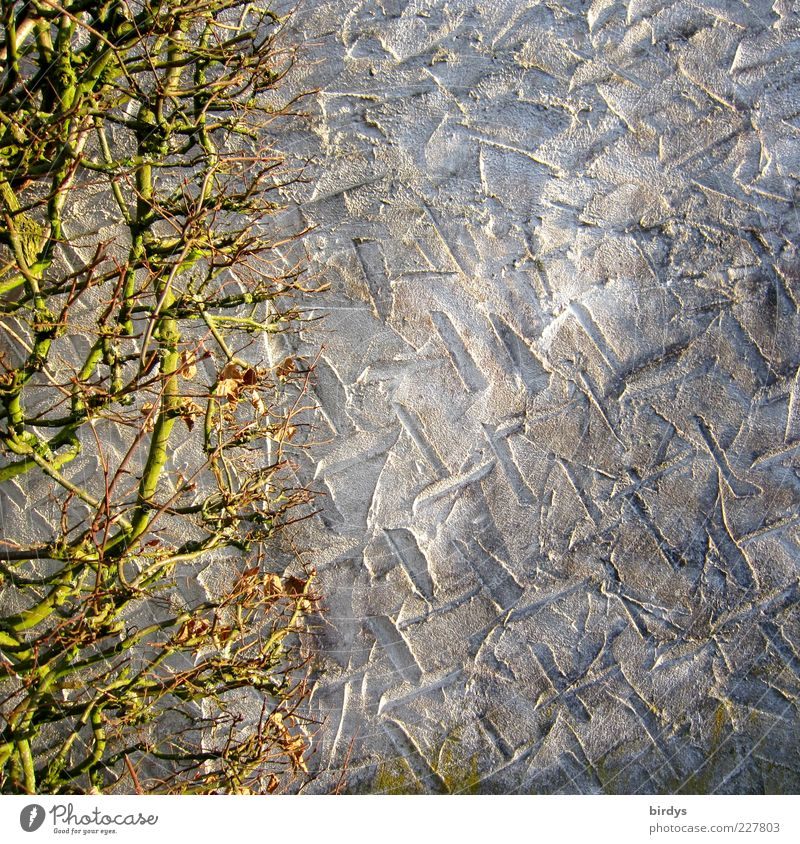 wallpaper Wand Mauer Hintergrundbild Perspektive Wandel & Veränderung einfach Putz Zweig Furche kahl Hecke Begrenzung laublos verputzt Putzfassade