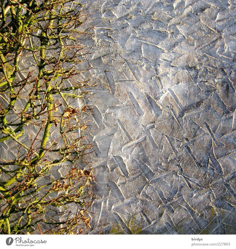 wallpaper Wand Mauer Hintergrundbild Perspektive Wandel & Veränderung einfach Putz Zweig Furche kahl Hecke Begrenzung laublos verputzt Putzfassade Licht & Schatten