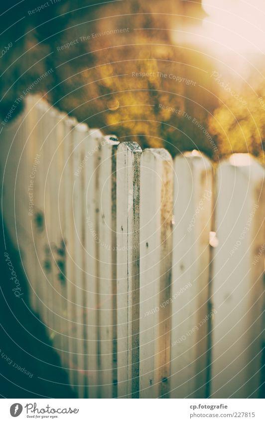 Morgen Natur Pflanze Sonnenlicht Herbst Schönes Wetter Sträucher Gartenzaun Zaun Tag Kontrast Sonnenstrahlen Gegenlicht Schwache Tiefenschärfe Unschärfe weiß